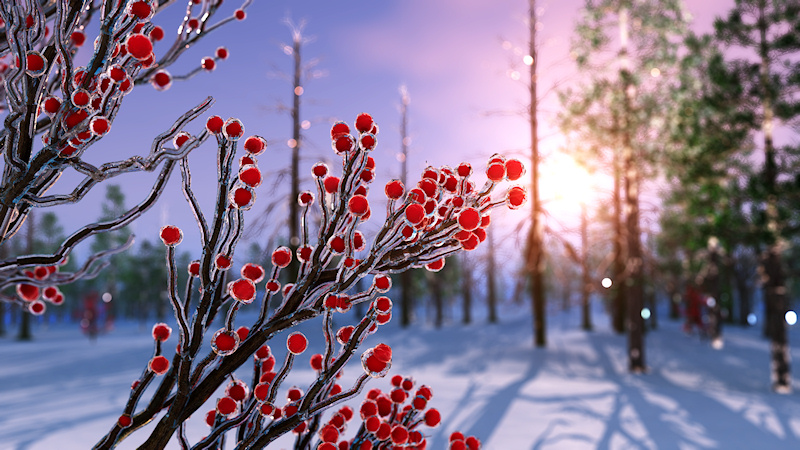 Winterberry in Ice
